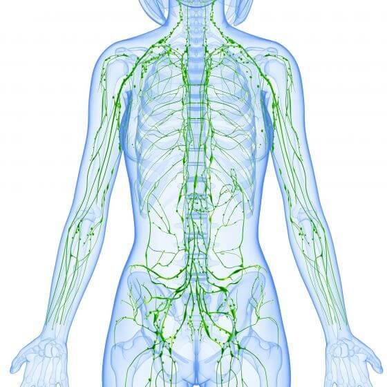 Схема расположения лимфатических узлов и сосудов в теле человека (фото: www.i.ytimg.com)