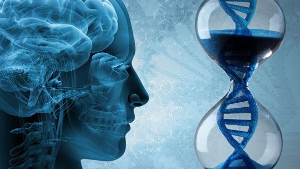 Можно ли остановить старение мозга у человека