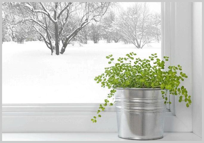 Зима лечит: полезные советы зимой, укрепление иммунитета