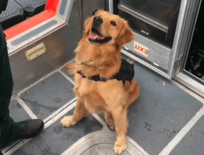 Служебная собака получила передоз