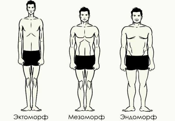 Программа тренировок на массу для эктоморфа