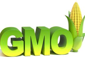 УзнавайТут Ярые противники ГМО оказались самоуверенными невеждами