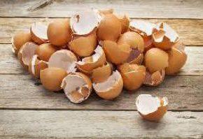 УзнавайТут Почему ненужно выбрасывать яичную скорлупу