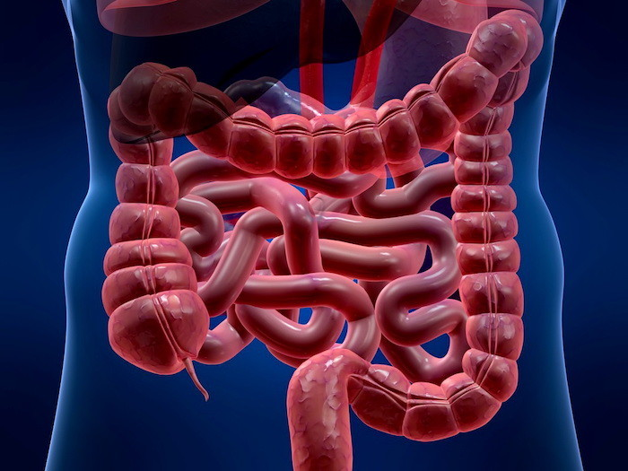 Синдром раздраженного кишечника симптомы и лечение