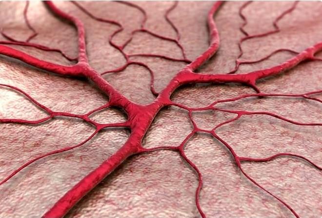 Сосуды и артерии у женщин стареют быстрее, чем у мужчин