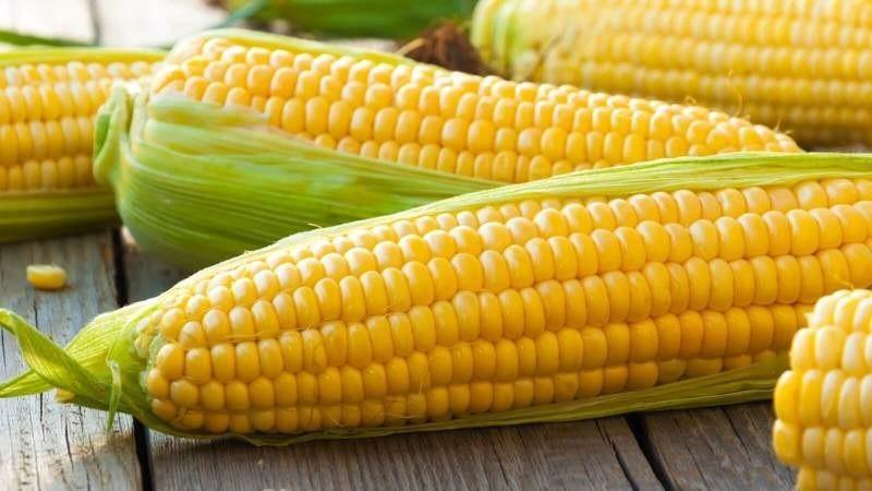 Полезные свойства вареной кукурузы